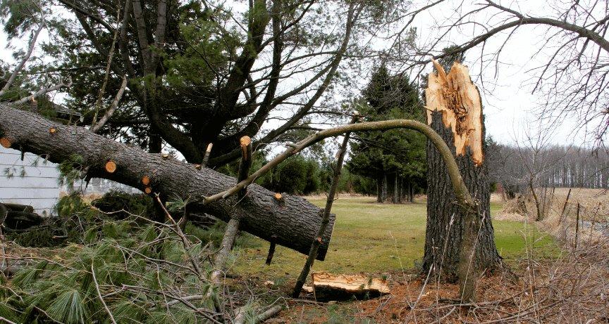 Columbus Emergency Tree Removal