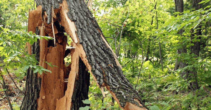 Emergency Tree Removal Columbus