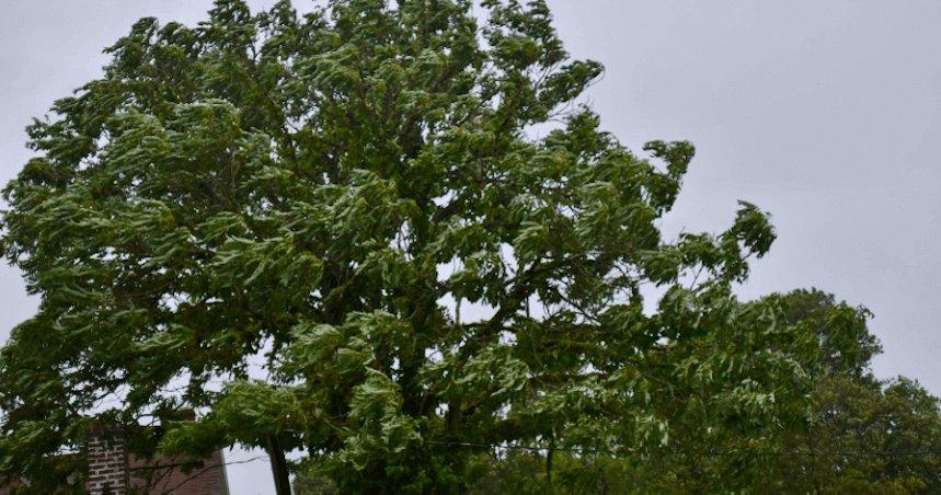 Emergency Tree Removal GA