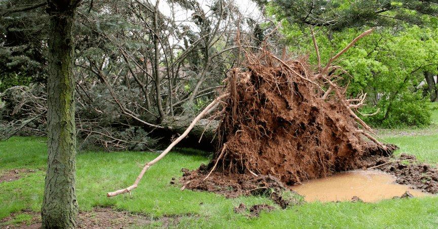 GA Emergency Tree Removal